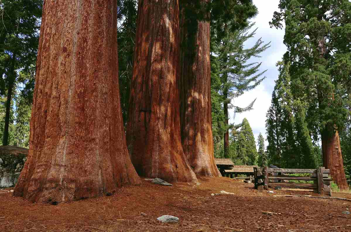 Travel: Sequoia National Park | Great American Things