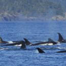 Travel: Alaska Whale Watching